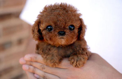 Is that a teddy bear or one of the cute dogs?