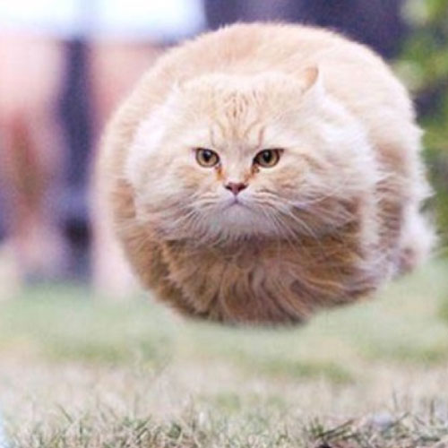 This hovering cat is one of the best funny animal photos.