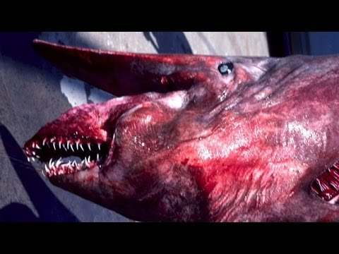 The Goblin shark is certainly one of the world's most bizarre animals