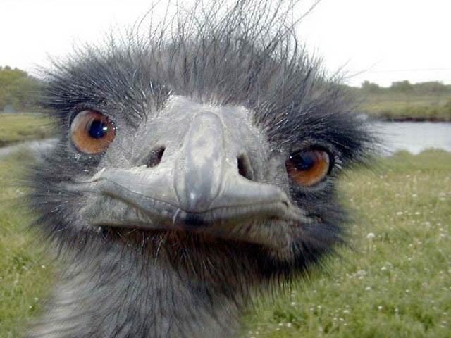 This emu close up is one of the best funny animal photos.