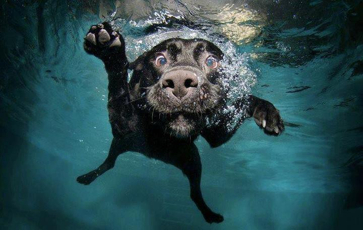 This swimming dog is one of the best funny animal photos.