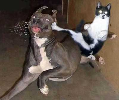 This cat kicking a dog in the face is one of the best funny animal photos.