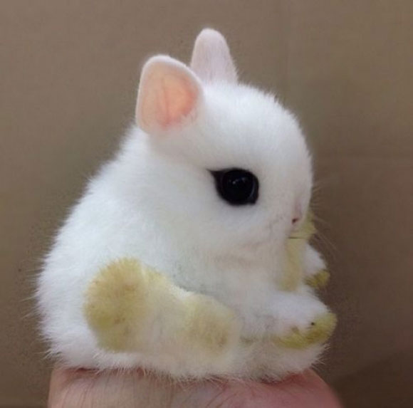 A cute baby bunny rabbit sitting on a man's hand.