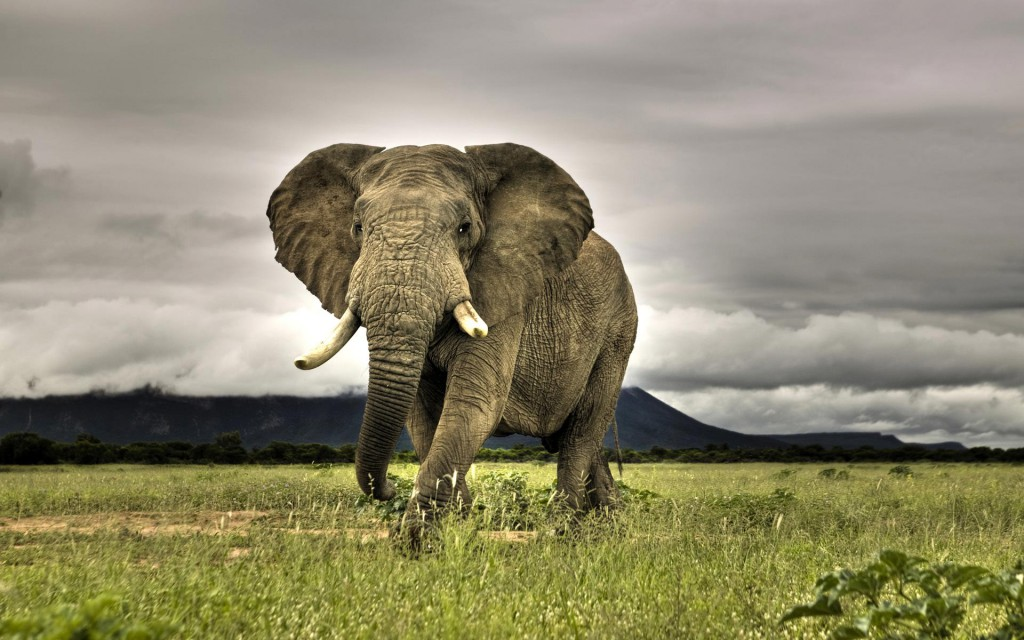 Just one of the African animals that will kill you