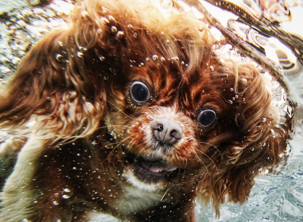 This dog looks like he is confused about being underwater.
