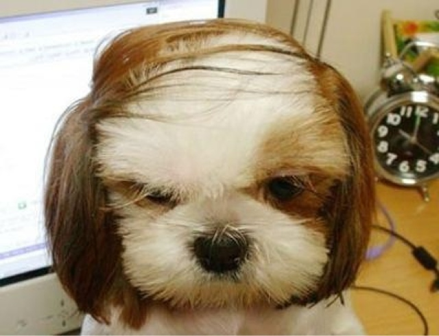 A furry dog with a comb-over hairstyle.