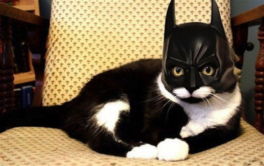 A black and white cat wearing a Batman mask, sitting on a chair - Cats In Hats.