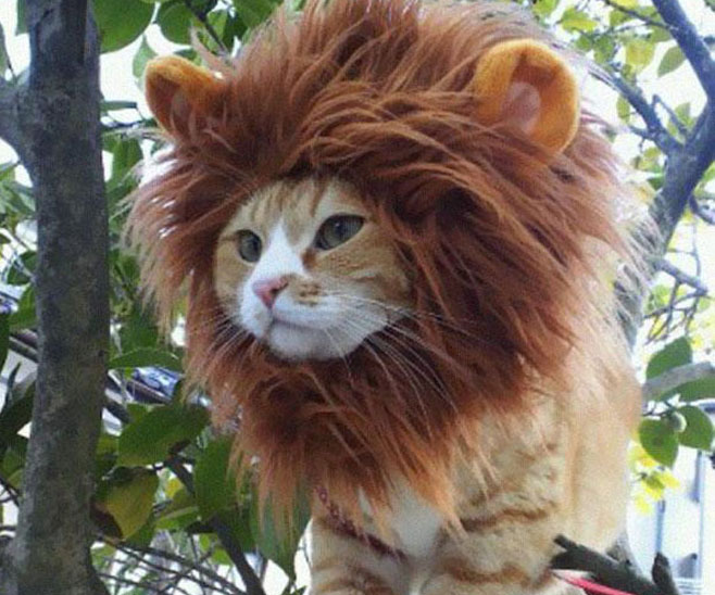 A cat wearing a lion costume, perched in a tree - Cats In Hats.
