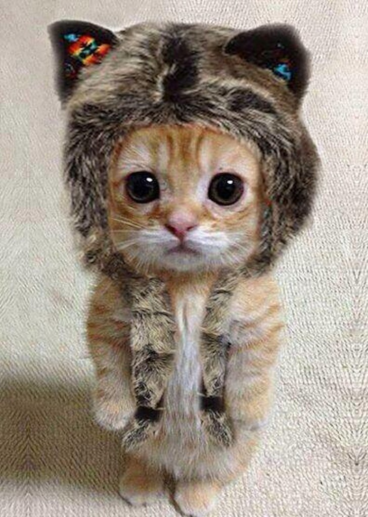 A small cat wearing a furry hat, standing on its hind legs.