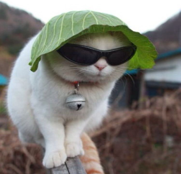 A cat wearing a cabbage leaf hat and sunglasses - Cats In Hats.