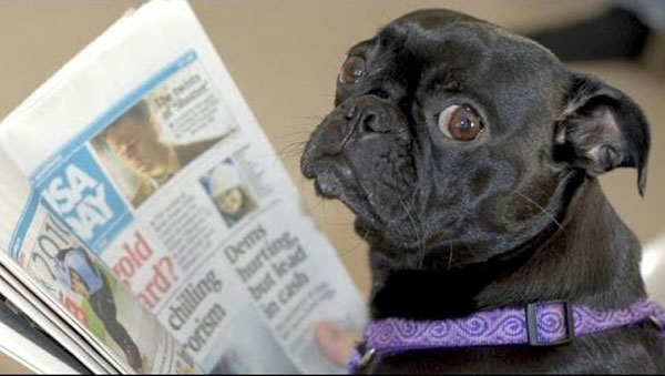A dog reading a newspaper - Dogs Acting Like Humans.