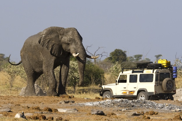 The world's largest land animal is the African elephant.