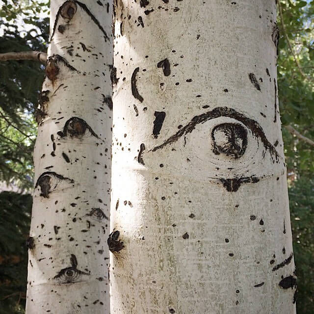 A tree with a large eye - The Trees Have Eyes