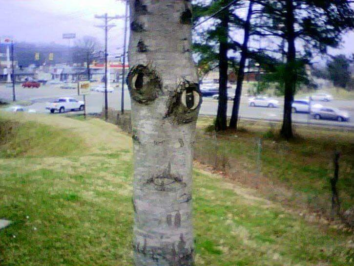 A tree that appears to have two eyes and a mouth - The Trees Have Eyes