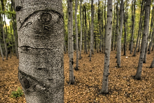 A tree with an eye - The Trees Have Eyes