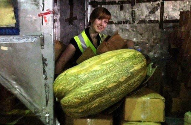 A giant squash discovered by customs at Birmingham Airport - 10 Strangest Things Found By Airport Security
