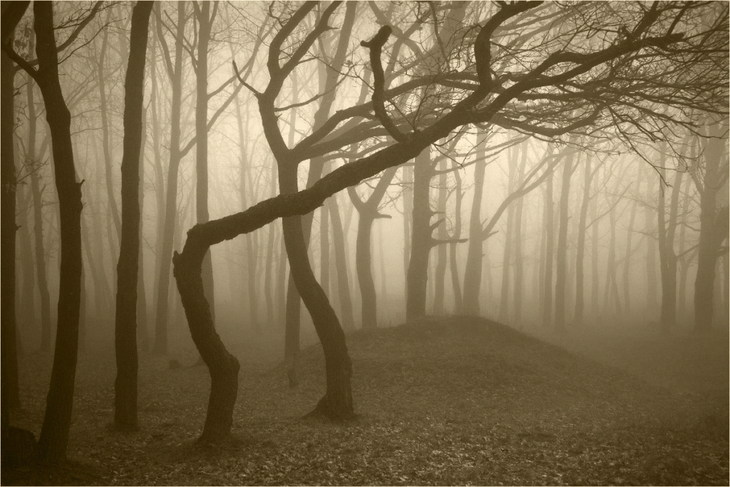 Most haunted forests in the world.