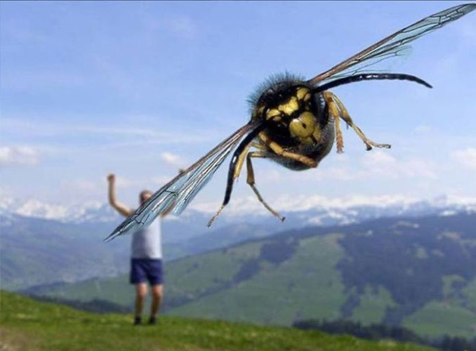 A photo of a giant bee - 20 Funny Animal Photos You Have To See