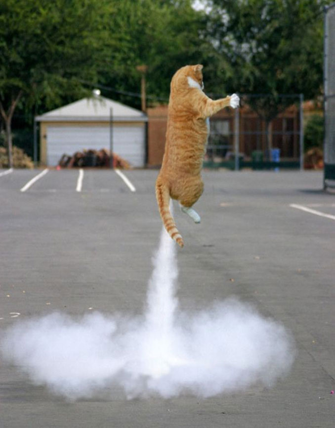 A photo of a rocket cat - 20 Funny Animal Photos You Have To See