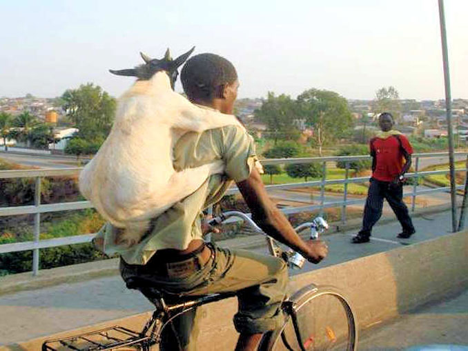 A man with a goat on his back while riding a bike - 20 WTF Photos You Just Have To See