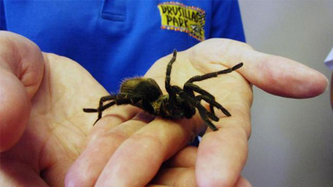 Tarantula found in bunch of bananas - Most Disgusting Things Ever Found In Food