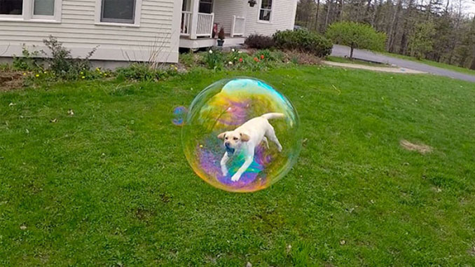A dog that looks like it is inside a bubble - 20 Funny Animal Photos You Have To See