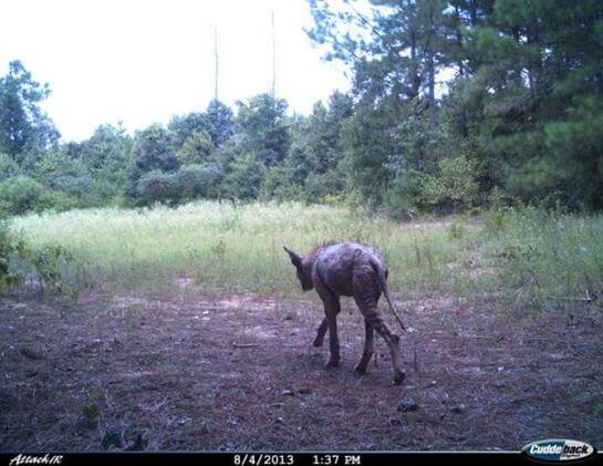 12 Creepy Trail Cam Photos You Have To See Slapped Ham