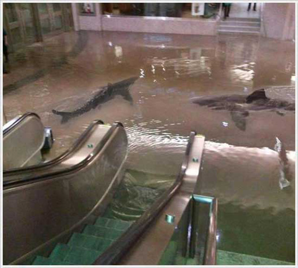 This image of sharks in a Kuwait aquarium explosion turned out to be a hoax