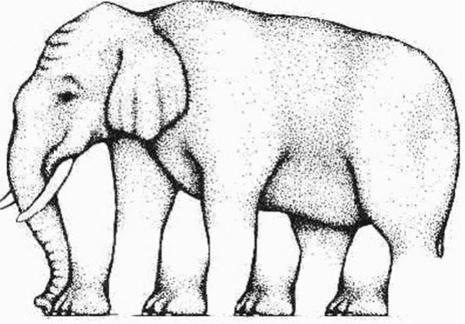 Elephant legs optical illusion.
