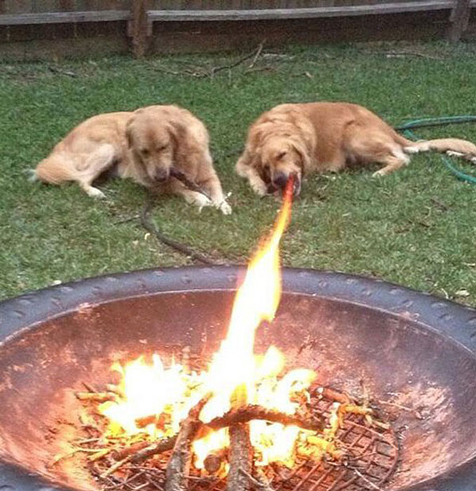 A photo of a dog that looks like it is breathing fire.