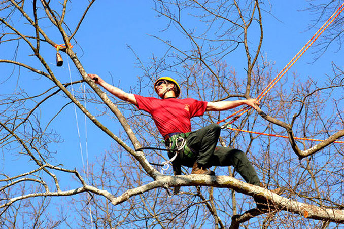 New York's Cornell University offers a class in Tree Climbing - 10 Strangest University Courses You Can Actually Take