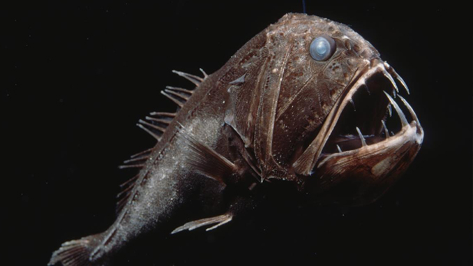 The fang tooth fish is a strange sea creature.