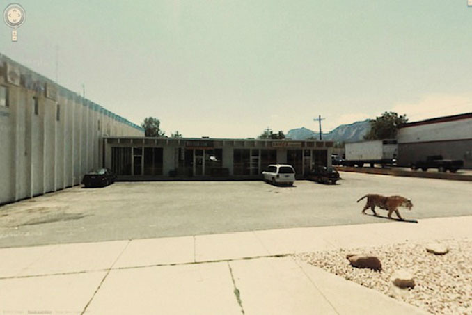 A tiger in a carpark seen on Google Street View.