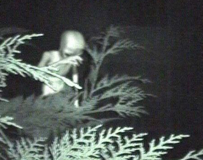 Alien in the Bushes - 10 Photos That Should Not Exist