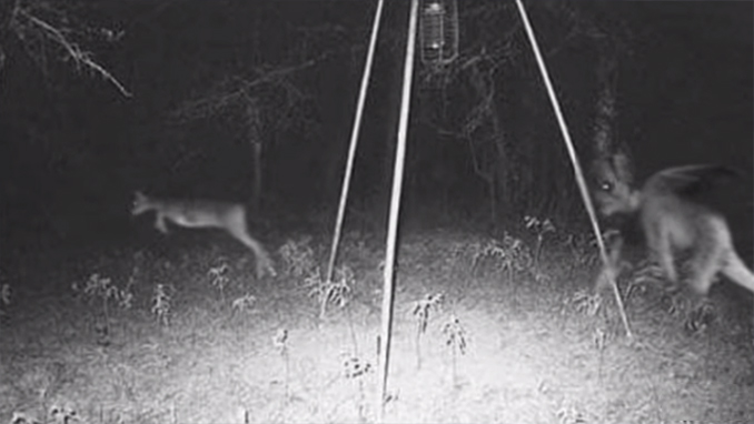 The Jersey Devil photographed on trail cam - 10 Strangest Things Ever Found in the Woods