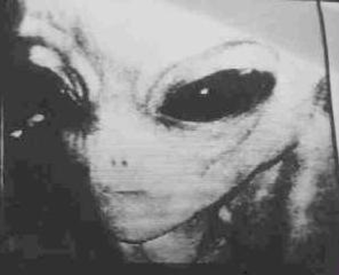 Alien caught on trail camera - 10 Trail Camera Photos That Cannot Be Explained