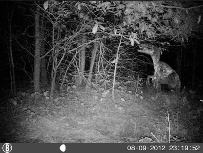 Dinosaur on trail camera - 10 Trail Camera Photos That Cannot Be Explained