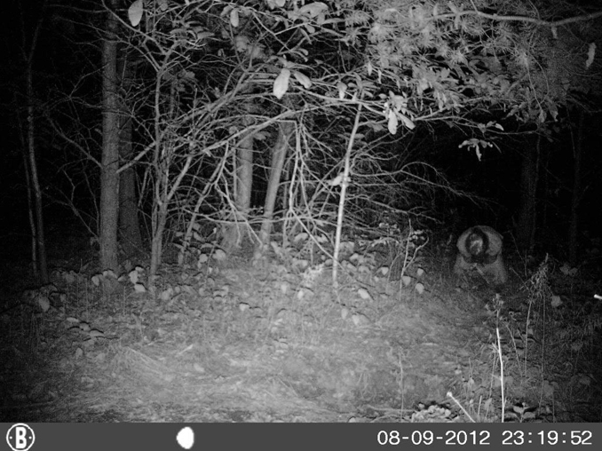 Monk praying on trail camera - 10 Trail Camera Photos That Cannot Be Explained