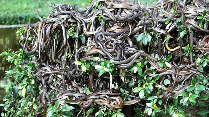 Snake Island in Brazil is one of the most forbidden places on Earth