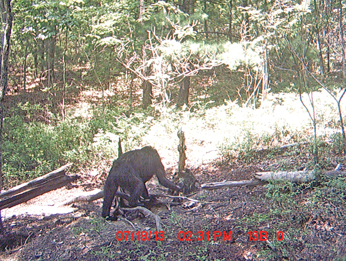 Ape-like creature captured on trail camera - 10 Trail Camera Photos That Cannot Be Explained