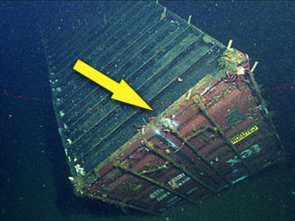 10 Strangest Things Found in Shipping Containers