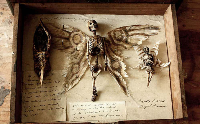 Fairy Found in Thomas Theodore Merrylin's Abandoned Laboratory - 10 Creepiest Things Discovered in Abandoned Buildings