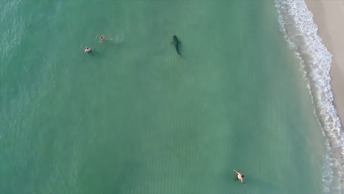 Shark spotted near swimmers at beach - Creepiest Drone and GoPro Footage Ever Captured