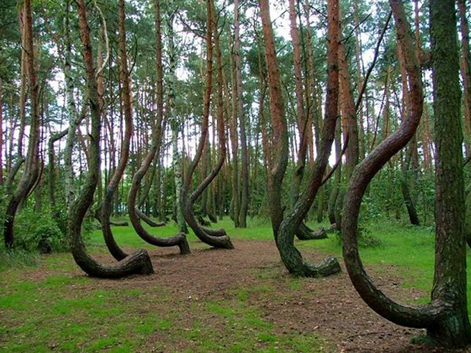 Hoia Baciu Haunted Forest is one of many Cursed Destinations You Should NEVER Visit