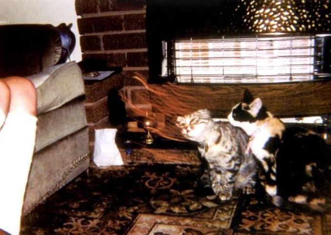 A cat being pulled by a ghost - 10 Creepy Ghost Animals Caught on Camera