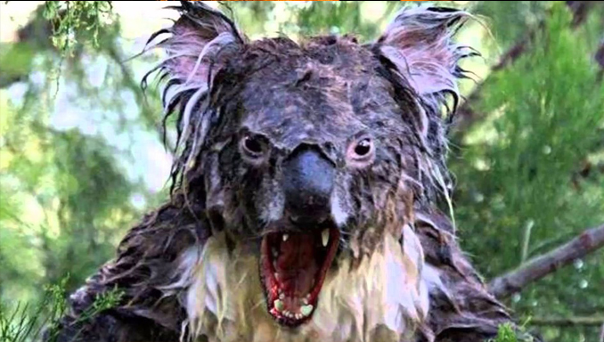 Drop Bears is one of Australia's Creepiest Urban Legends
