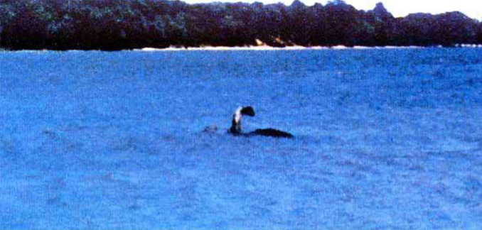 - Real Dinosaur Sightings That Have Scientists Baffled