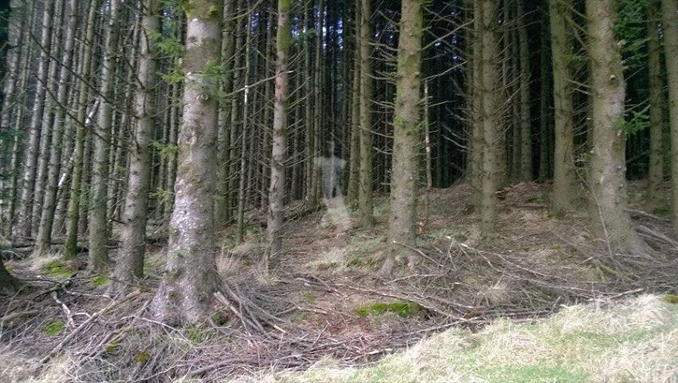 Ghost photographed in Ballyboley Forest in Northern Ireland - Is This Proof of the Afterlife Caught on Camera?