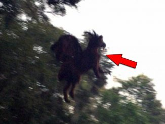Terrifying Jersey Devil Sightings Scare Local Residents