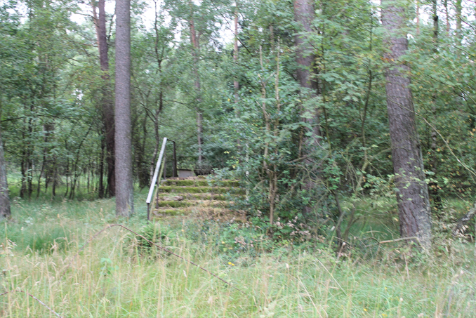 A strange set of stairs in the middle of the woods